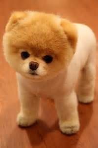 I Love These Bear Dogs I Luv Animals Pinterest See