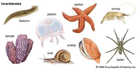 invertebrates characteristics examples animals habitat