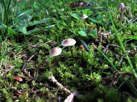 Pilze Im Boden Garten by Pilze Im Garten