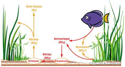 cycle de l azote