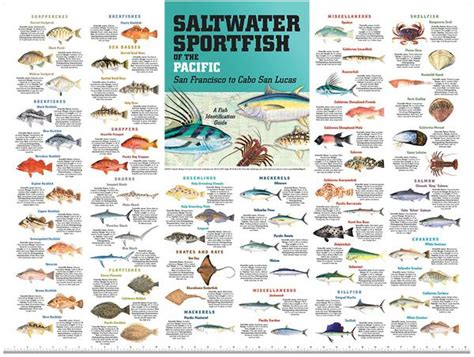 pacific southwest fish id poster  studio abachar