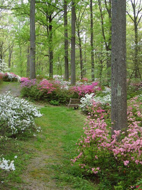 maryland garden brighton dam azalea garden