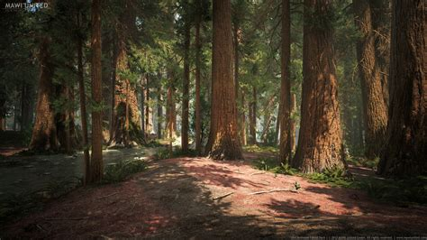willi hammes ue redwood forest