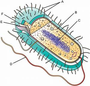 Unique Characteristics Of Prokaryotic Cells