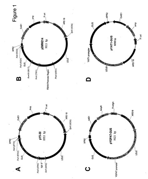 blank transverse wave diagram standing wave diagram