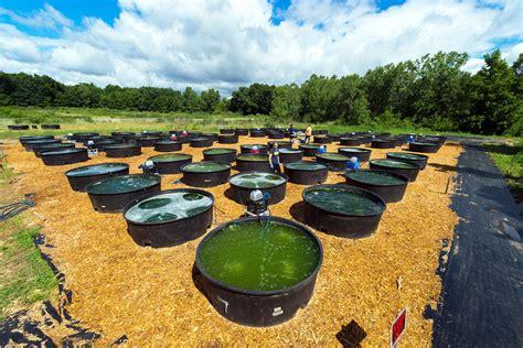 university  michigan wins grant  perfect algae