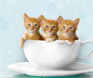 30 best Cats in cups images on Pinterest