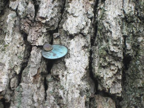 gettysburg witness trees gettysburg daily