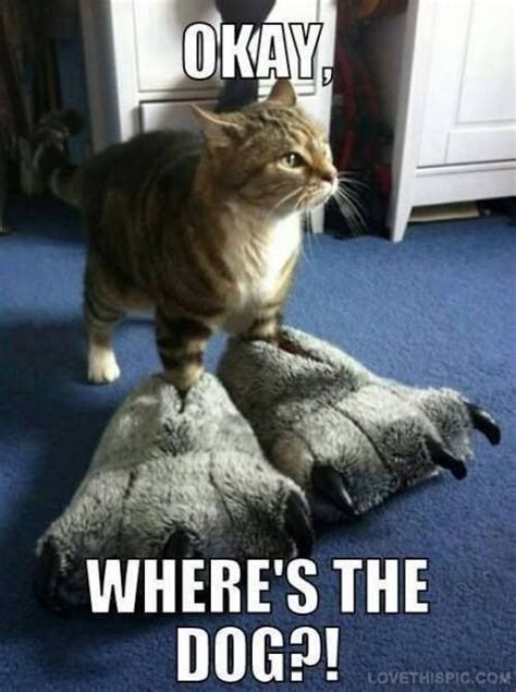 Wheres The Dog Funny Cat Dog Meme Funny Quote Funny Quotes