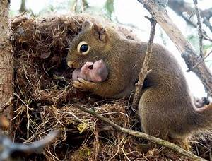 A Squirrel's Nest: Not So Shabby On The Inside