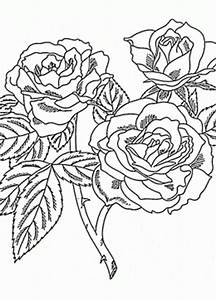 Rose coloring pages - coloring pages of rose flowers ...
