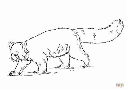 Panda Coloring Pages Printable Carnivore Drawing Sheet