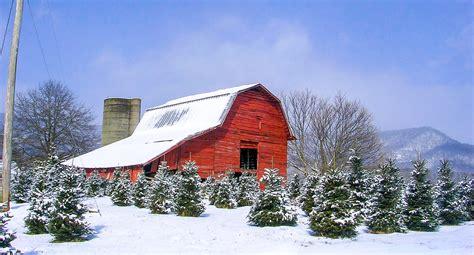 smoky mountain christmas tree farm visit nc smokies