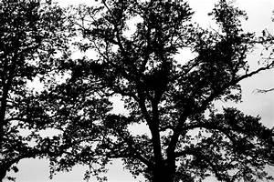 Herbst Schwarz Weiß : herbst in schwarz wei foto bild pflanzen pilze flechten b ume baumrinden wurzeln ~ Orissabook.com Haus und Dekorationen