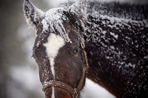 snow horse horses wet sad disasters keep safe during natural brown winter pretty hit