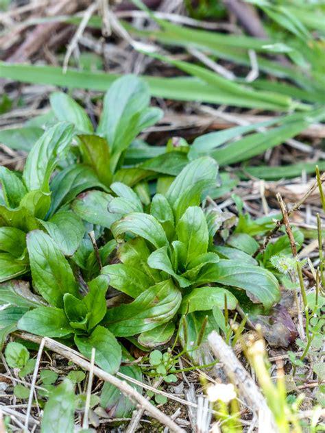 cuisine plantes sauvages comestibles les plantes sauvages comestibles théorie et pratique