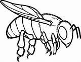 Bee Coloring Honey Pages Drawing Line European Bees Bumblebee Bumble Hive Beehive Drawings Flying Outline Printable Cartoon Getdrawings Getcolorings Coloringsky sketch template