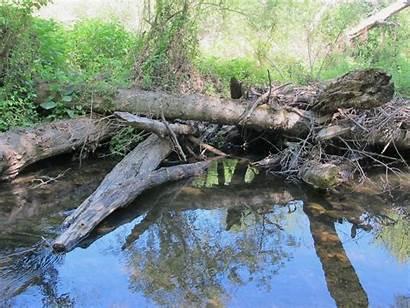 Habitat Salmon Debris Cleanup Woody Streams River