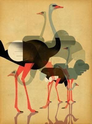 ostriches  dieter braun  hercio dias east  prints