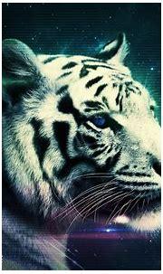 Weißer Tiger Full HD Wallpaper and Hintergrund | 2560x1600 ...