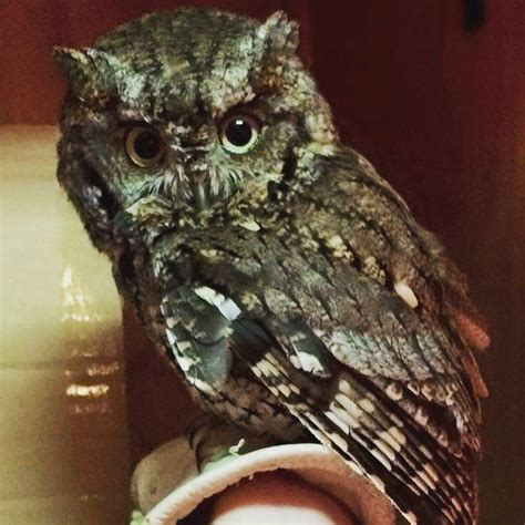 Best Images About Alabama Wildlife Center Pinterest