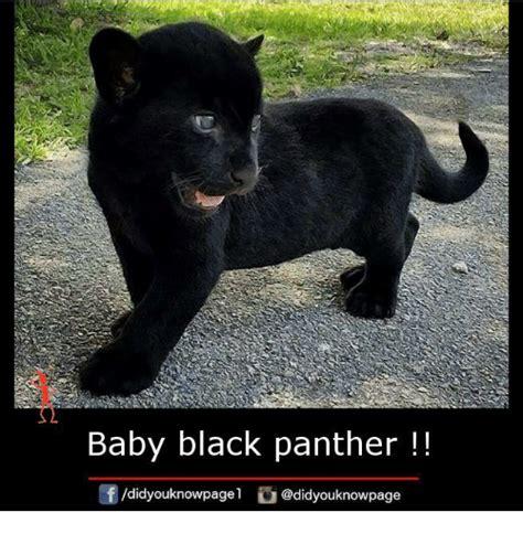 Black Panther Memes - 25 best memes about black panthers black panthers memes