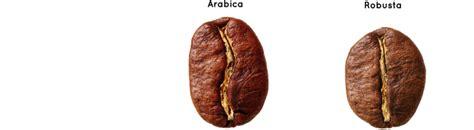 welche kaffeearten gibt es kaffeewissen welt des kaffees gourmet kaffeekapsel