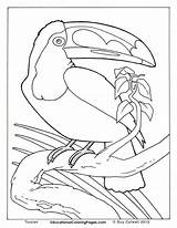 Coloring Realistic Pages Animals Animal Popular sketch template