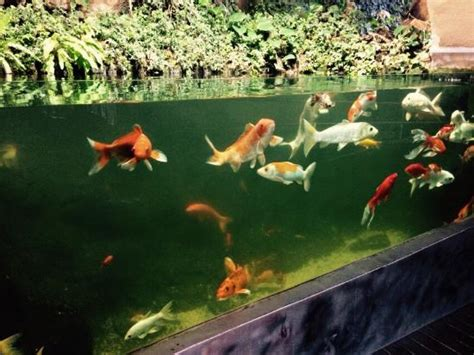 aquarium a visiter en une visite splendide retour en enfance d 233 couverte et agr 233 able moment picture of aquarium