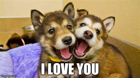 Cute I Love You Meme - cute i love you memes www pixshark com images galleries with a bite