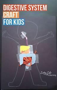 Digestive System Craft For Kids