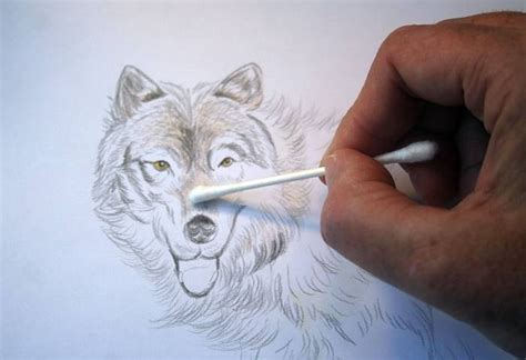 Wolf Drawing Colored Pencil