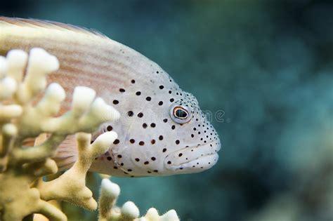 fish grouper reef sea water ice