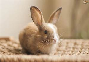 Best Pets For College Students Rabbit Hope Elephants