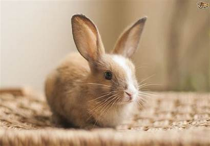 Rabbit Pets Pet Much Cost Does Keep