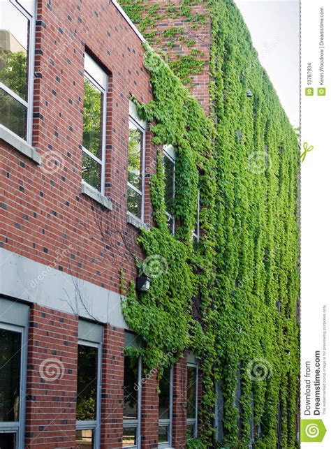 ivy   red brick building stock images image