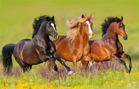 names famous horse most horses race mare racehorse popular stallion three meanings thunder pet preakness