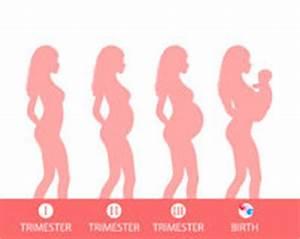 Kopfschmerzen Schwangerschaft 3 Trimester : 3 trimester der schwangerschaft vektor abbildung ~ Whattoseeinmadrid.com Haus und Dekorationen