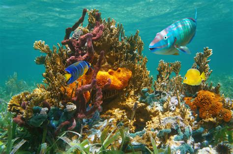 diving keys florida snorkeling scuba reef key west dive fish tropical park underwater coral largo bahia state resorts sea vacations