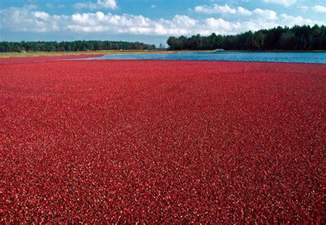 Cranberry Color Ferrebeekeeper