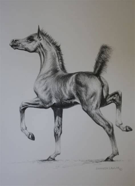 drawings horses horse pencil arabian pony animal dartmoor artwork equine shannon drawing sketches anatomy ponies majestic graphite rendering lawlor thought