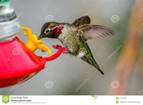 hummingbird stock photo image 37124140