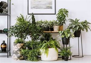 5, Lifesaver, Indoor, Plants, Which, Release, Oxygen, At, Night