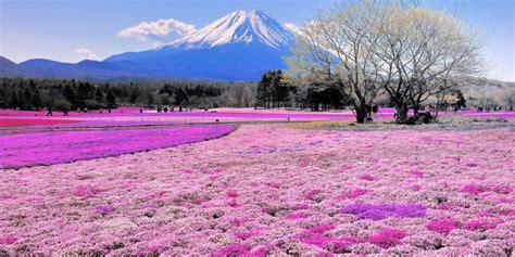 padang bunga  cantik  dunia part  merdekacom