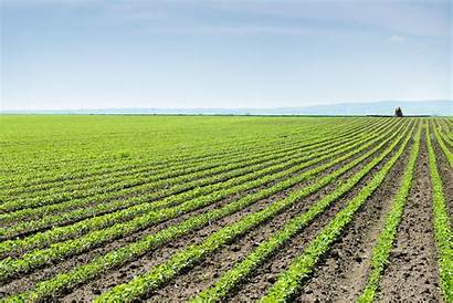 Gmo Agriculture Crops Shutterstock Land Omg Industry