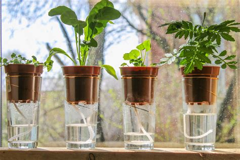 balkonpflanzen automatisch bewaessern einfache ideen