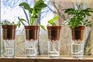 Pflanzen Bewässern Urlaub : blumen giesen balkon urlaub my flowers ~ Watch28wear.com Haus und Dekorationen