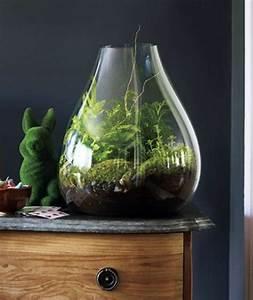 Bonsai Im Glas : pflanzen im glas pflanze im glas pflanzen im glas glasbiotope westfach originelle blument pfe ~ Eleganceandgraceweddings.com Haus und Dekorationen