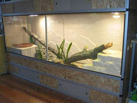 lighting for bearded dragon vivarium 20 best images about bearded dragon on pinterest dragon
