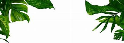 Jungle Leaves Tropical Picsart Sticker